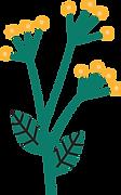plant colour 1.png