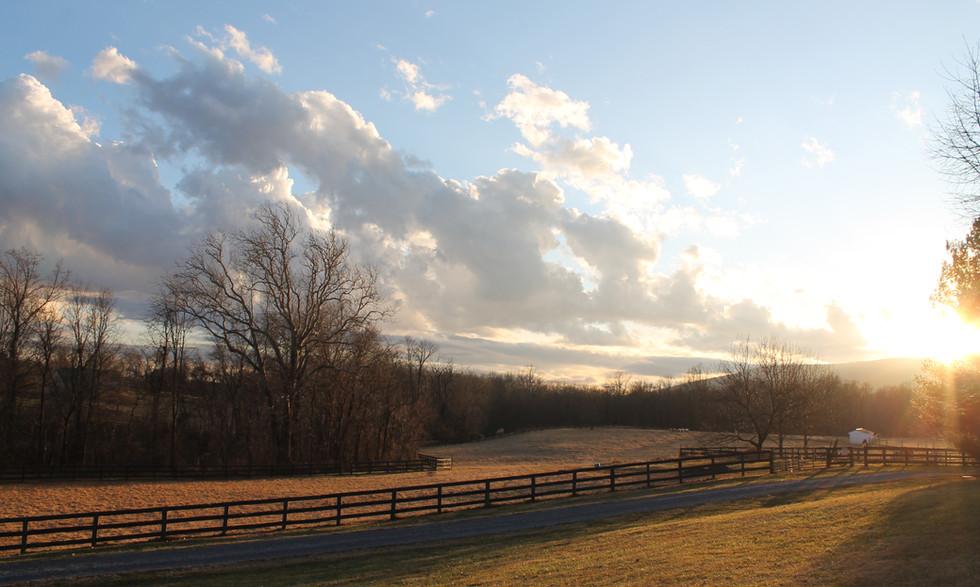 farmfield1.JPG