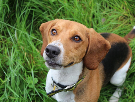Dog lovers in Northern Ireland needed to take part in 'land-bark' survey