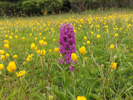Causeway Hospital becomes first healthcare site to sign up to All-Ireland Pollinator Plan
