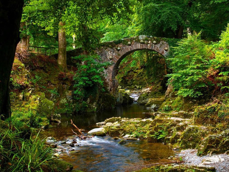 Poots highlights £5.7million DAERA investment in forest parks