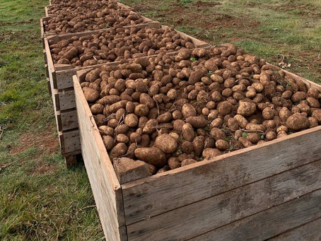 Poots signals support for local potato sector