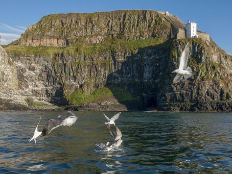 Storey backs plans to preserve seabird colony on Rathlin