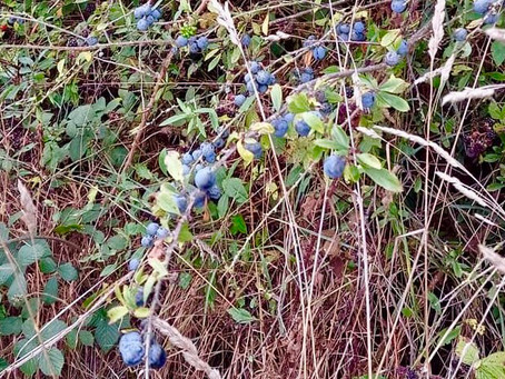 When Autumn gives you berries… simple Sloe Gin recipe from Wholesome NI