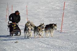 Polardistans 2013