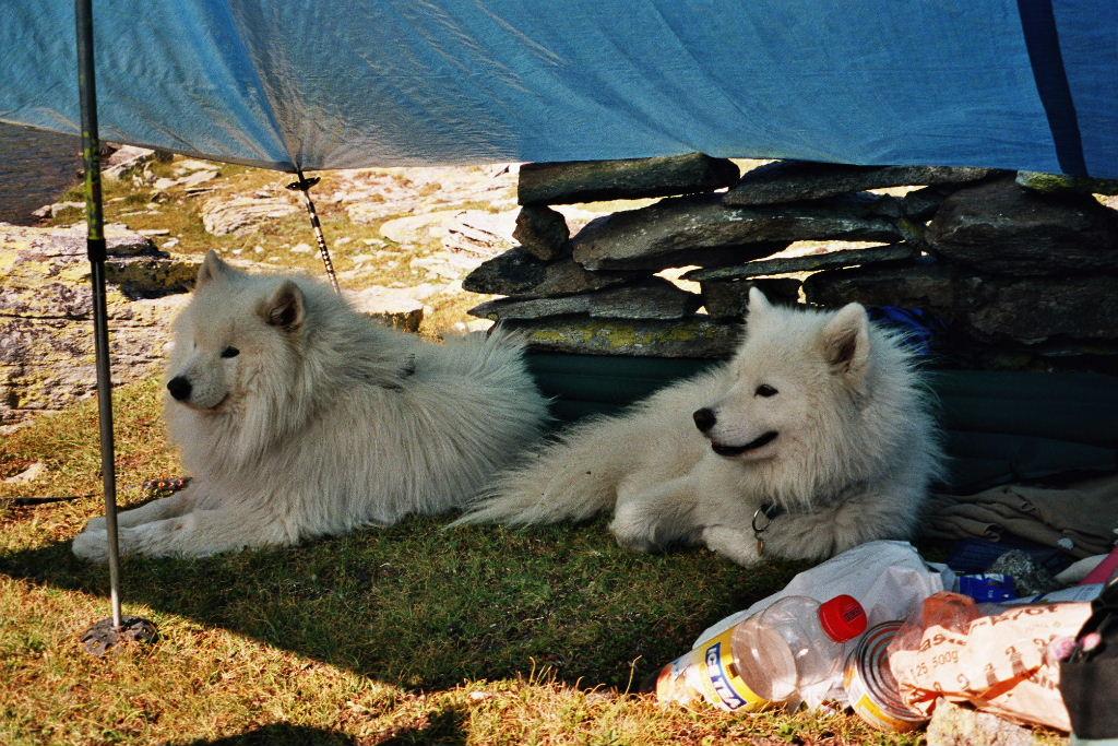 Odin und Minko