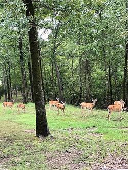Hot Springs home for sale - deer