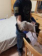 roof rat removal - nashville - brentwood
