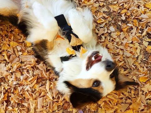 Toby loves autumn