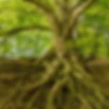 ast-baum-baume-1080401.jpg