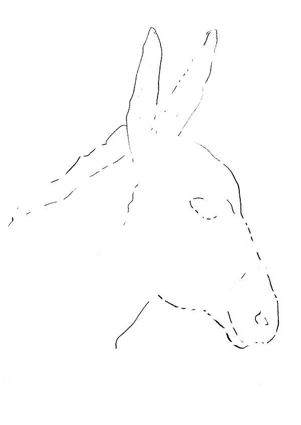 donkey1 copy.jpg