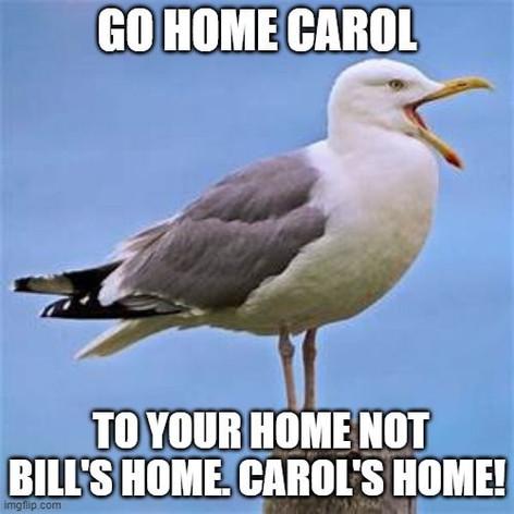 Loud Seagull