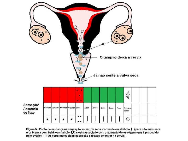 fertilidade, possivel gravidez