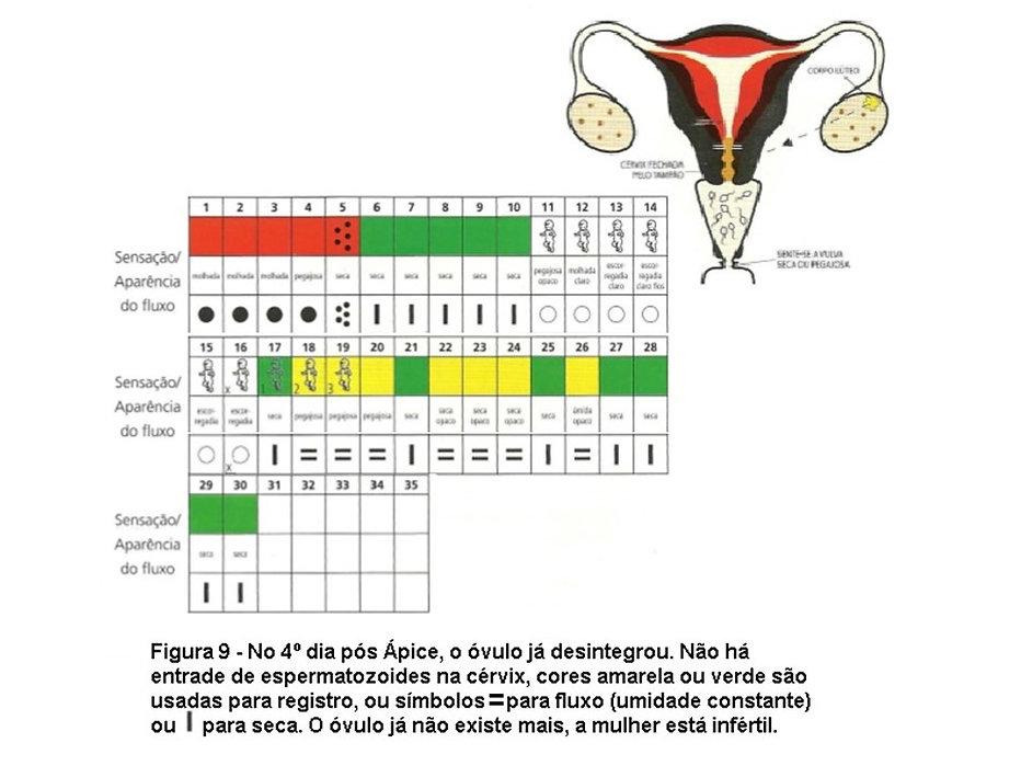 grafico do cicloovulatório