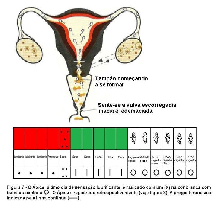 Alta fertilidade, ápice