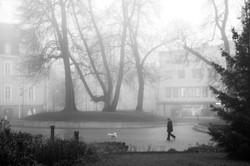 Foggy doggy walk