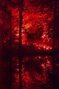 Forest heat