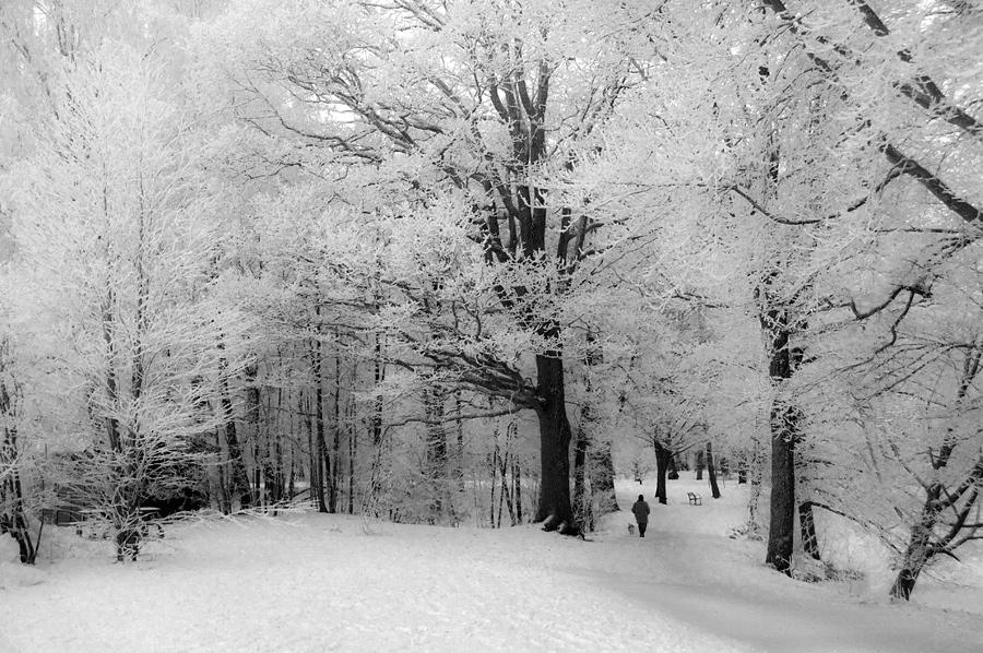 Frosty dogwalk