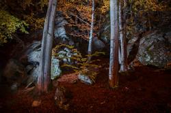 Trees in the ravine
