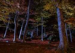 Sidelighted autumn