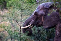 Mama elephant breakfast