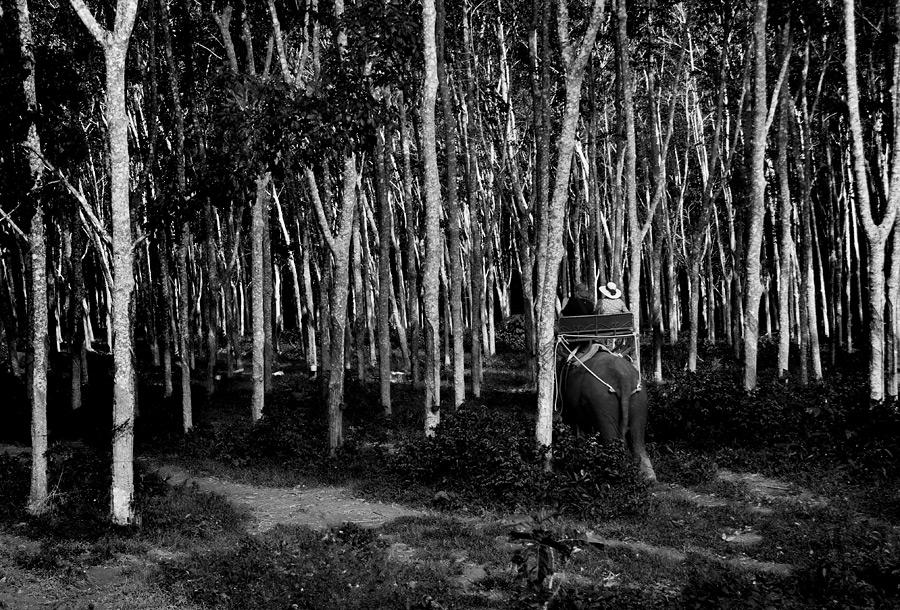 Entering Rubberwoods