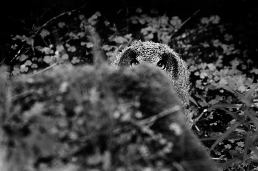 Owl hideout