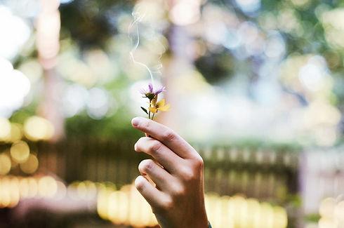 flower-1210067.jpg