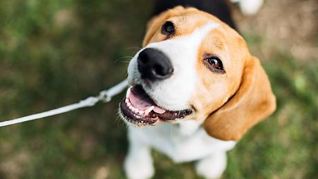 Dog and Cat Flea Treatment.jpg.webp