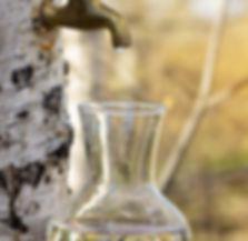 vegetal-water-seve-de-bouleau-bio-bienfa