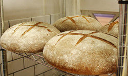 Malted Wheat boule