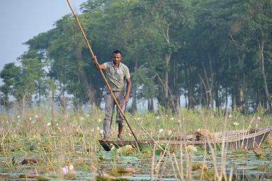 Wetlands 2.jpg