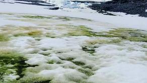 Antarctica Snow Turns into Green