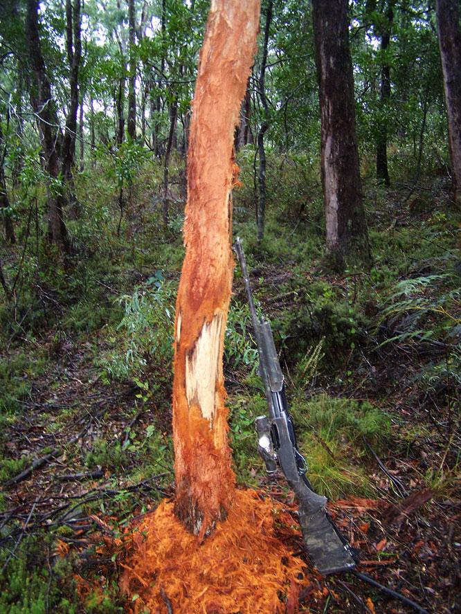 rub tree
