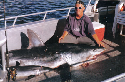 big mako shark 300+ kg