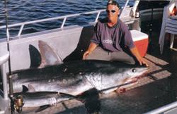 big mako shark 300+ kg