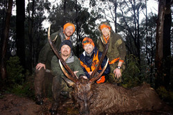 Adams 32 inch sambar stag
