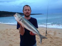 Big Australian salmon