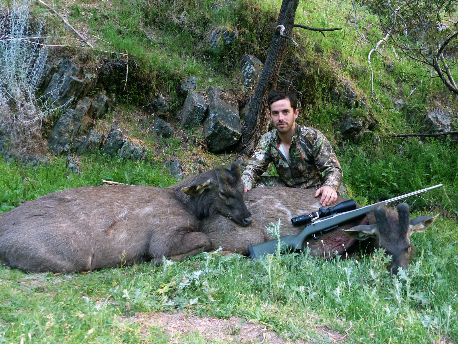 Tom and his two sambar stags