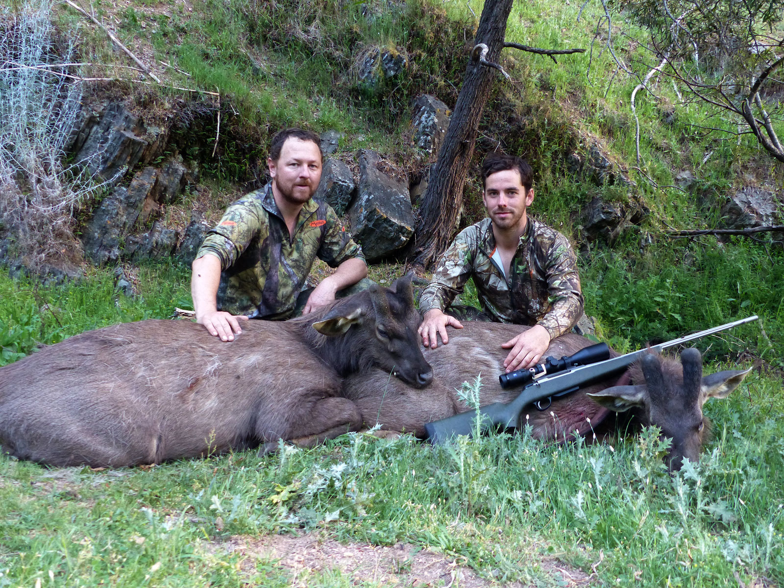Tom's sambar deer