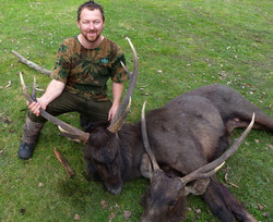 good day two nice stags