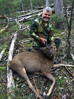 Nicks First Sambar Deer