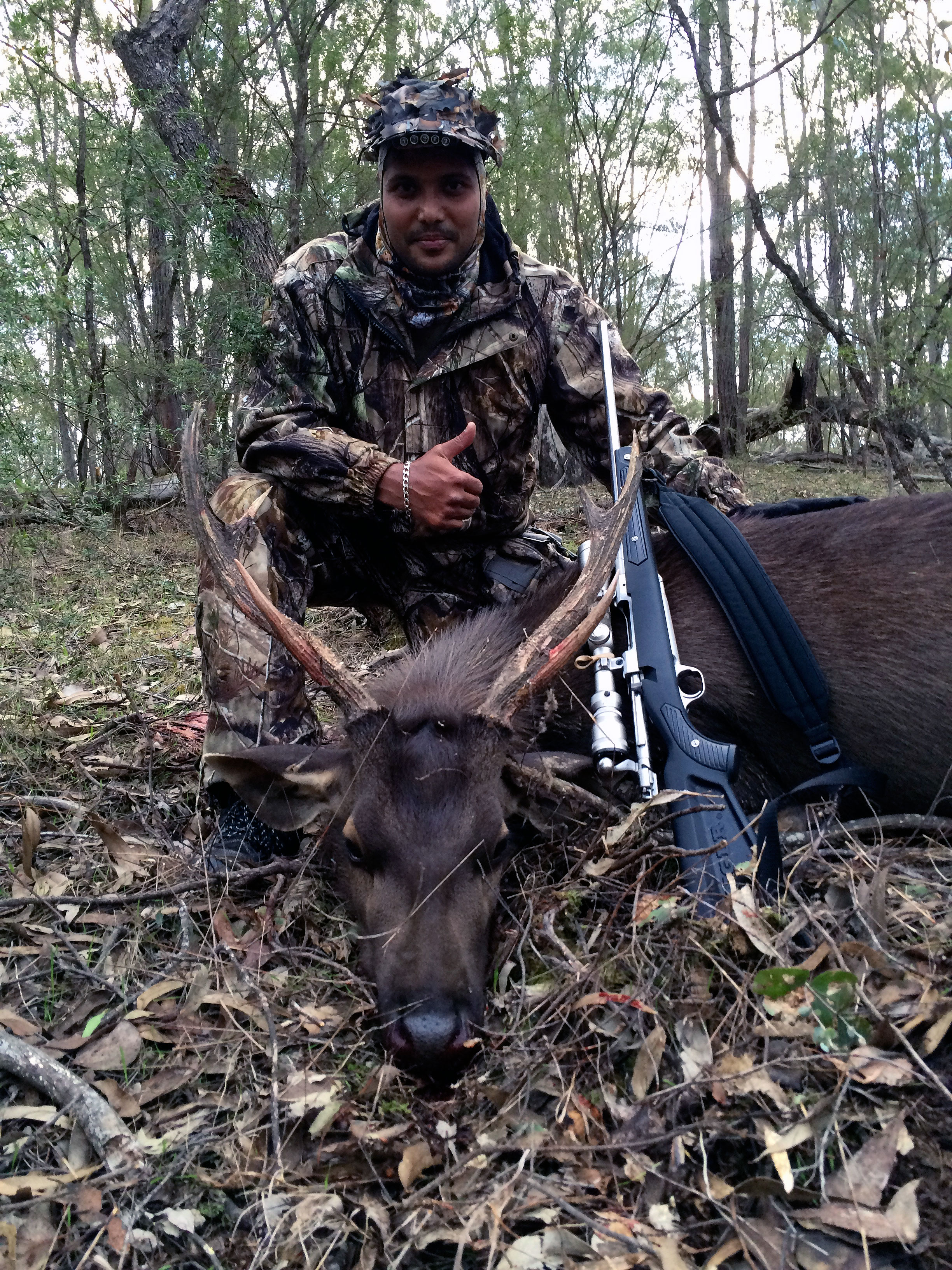 Andrews first sambar deer