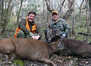 Adrian first and second sambar deer