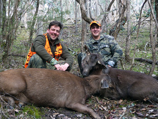 Adrian first and second sambar deer