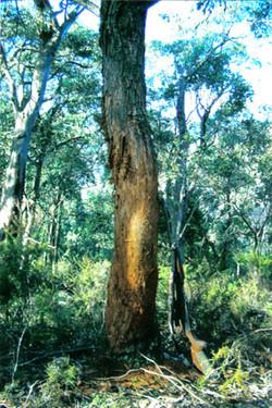 good rub tree
