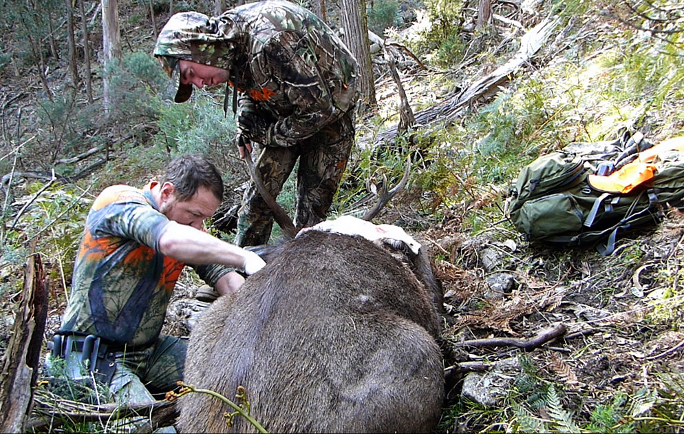Butchering a stag
