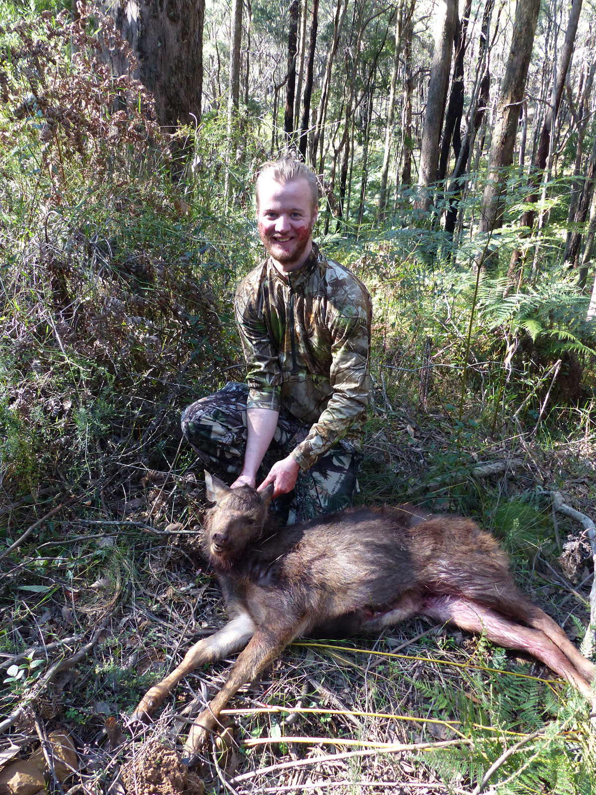Taygen's first sambar deer