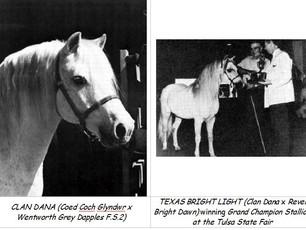 American WMP History -                   The Texas Stud