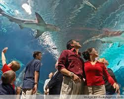 family at aquarium.jpg